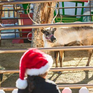 LA Zoo Reindeer Romp @ LA Zoo  | Los Angeles | California | United States